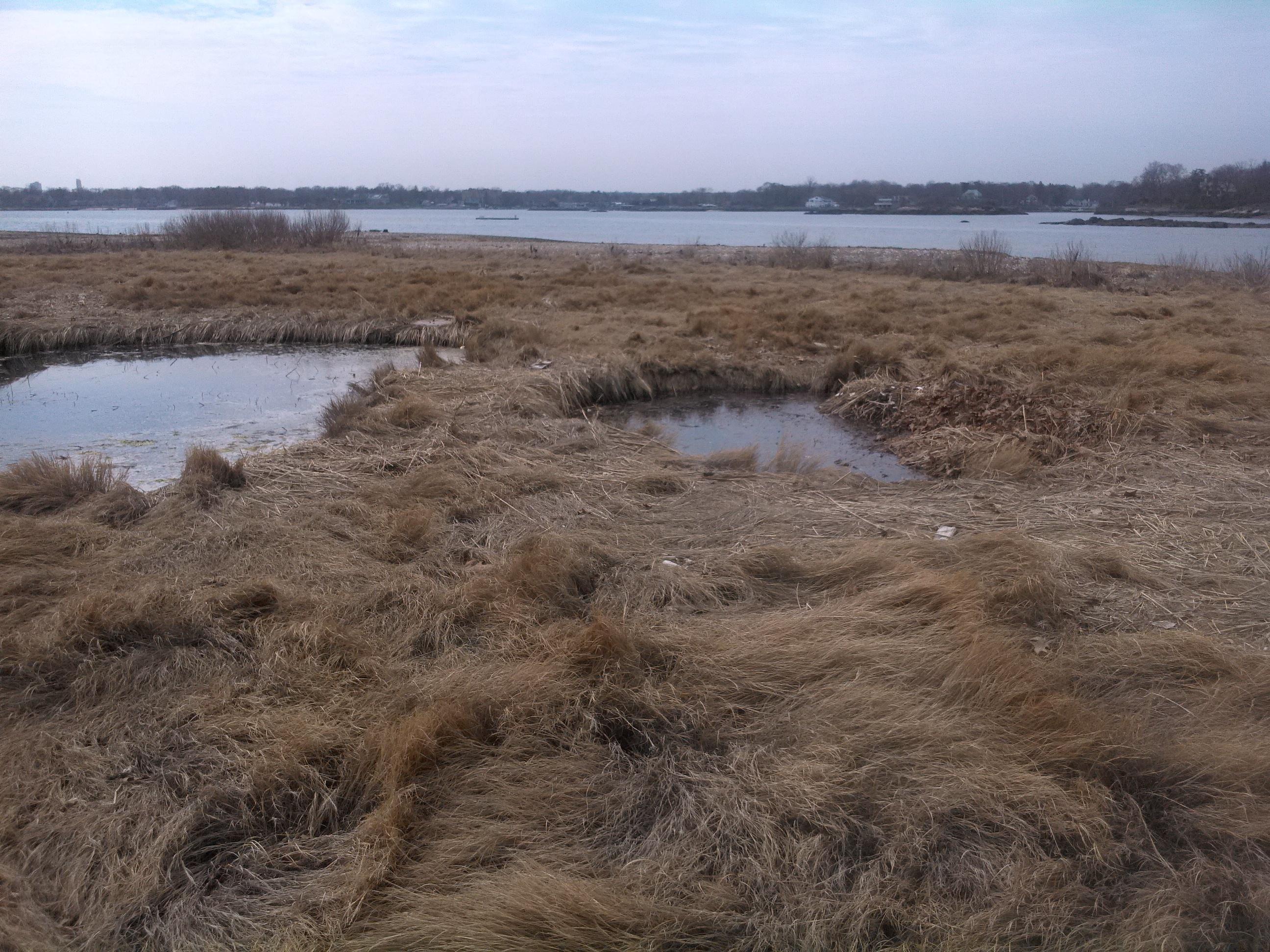 Volpe filling in wetlands 1